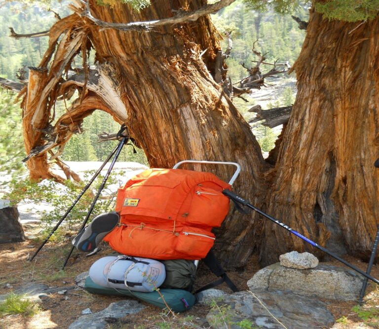 backpacking gear leaning against a tree.