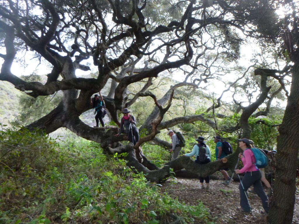 People Hiking Oats Peak Trail