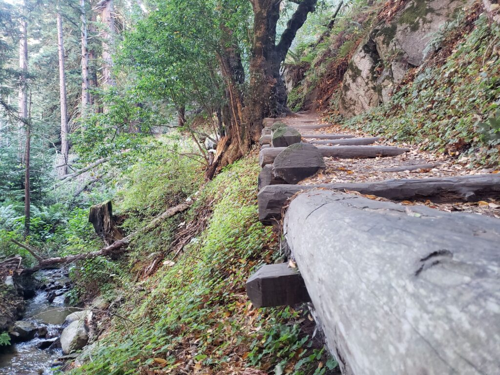 a wooden foot path on a hiking trail