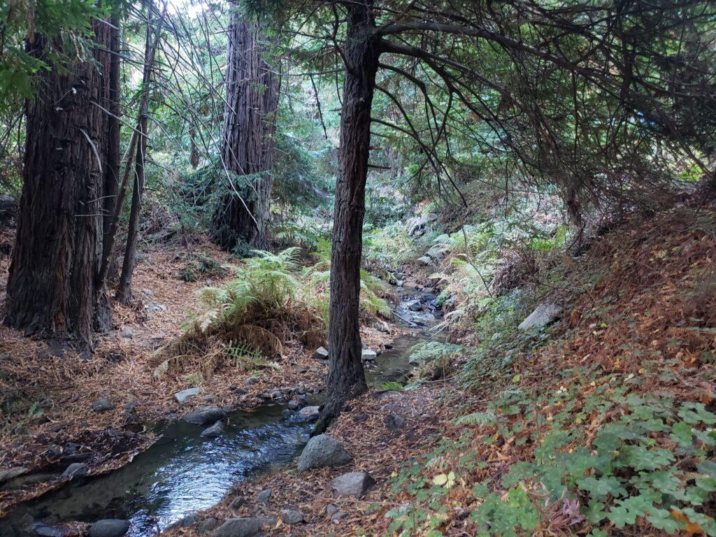 the loop hiking trail at Garraparta State Park